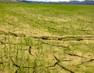 Nắng nóng kéo dài, lượng mưa 6 tháng đầu năm giảm 10%