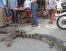 """""""Trưng bày"""" cá sấu sống ngay cổng chợ"""