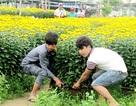 Sinh viên lùi ngày về quê để bưng hoa dịp Tết