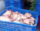 Phụ huynh ngăn chặn một vụ cá, thịt thối tuồn vào bếp ăn học sinh