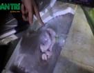 Bắt giữ hơn 1 tấn nội tạng không rõ xuất xứ tuồn vào Hà Nội