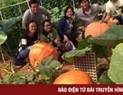 Trải nghiệm tại những vườn hoa quả độc, lạ ở Đà Lạt