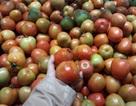 Dịch bệnh hoành hành khiến giá cà chua tăng kỷ lục