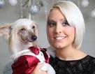 Chi gần 5000 bảng mua quà Noel cho chó cưng