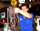 Độc đáo chợ rắn miền Tây mùa nước nổi