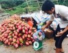 Thanh long 10.000 đồng/kg đổ đống khắp vỉa hè Hà Nội