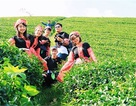 Hotgirl Ngân hàng du lịch Mộc Châu 2 ngày với 300 nghìn