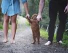 Độc đáo bộ ảnh gia đình của cặp vợ chồng muộn con