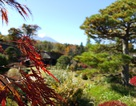Mùa thu Nhật Bản rực rỡ qua lăng kính smartphone màn hình cong