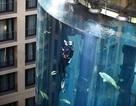 """Chiêm ngưỡng bể cá """"khủng"""" có thang máy bên trong"""