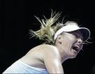 Đánh bại Halep, Sharapova rộng cửa vào bán kết
