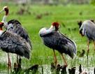 Coca-Cola nỗ lực phục hồi đa dạng sinh học tràm chim