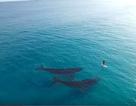 Khoảnh khắc người chèo ván đối mặt với hai con cá voi lớn