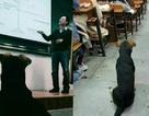 Chú chó chăm học khiến nhiều sinh viên hổ thẹn