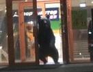 Gấu hoang dã bị cảnh sát bắn hạ vì làm loạn trung tâm mua sắm