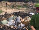 Tiêu hủy gần 2 tấn nguyên liệu thuốc bắc không rõ nguồn gốc xuất xứ