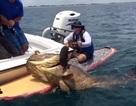 """Bất ngờ câu được cá mú """"khủng"""", nặng 186kg"""