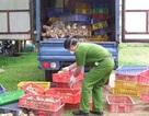 Bắt xe ô tô vận chuyển trên 7000 gia cầm giống Trung Quốc nhập lậu