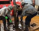 """""""Nhảy"""" 10%, giá dầu tăng mạnh nhất 6 năm rưỡi"""