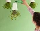 Những ý tưởng tuyệt vời cho vườn rau trong nhà