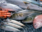 Thuỷ hải sản nào trẻ nên và không nên ăn?