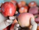 Phân biệt trái cây an toàn cần tinh ý