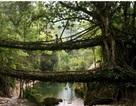 """Ngắm cây cầu như """"tuyệt tác nghệ thuật giữa thiên nhiên"""""""