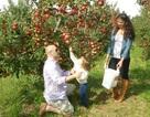 Đến thăm những vườn táo tuyệt đẹp trên đất Mỹ