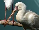 Phú Quốc đón gần 200 động vật quý hiếm
