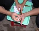 """Bàn thêm về """"nghi án"""" sử dụng thuốc tránh thai trong nuôi lươn ở Nghệ An"""