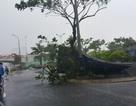 """Hình ảnh Đà Nẵng """"liêu xiêu"""" trước cơn bão số 3"""
