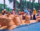 Chật vật xử lý nợ nần hậu vụ án tại Nông trường Sông Hậu