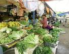 Nguy hại khôn lường từ rau ngót, rau muống nhiễm hoá chất
