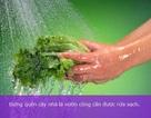 Cách rửa rau củ, quả an toàn nhất