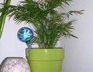 8 loại cây trồng trong nhà mang lại sức khỏe, vui mắt