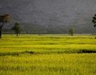 Cảnh yên bình như tranh vẽ dưới chân núi Bà Đen - Tây Ninh