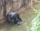 Sở thú Mỹ bắn chết khỉ đột, cứu bé trai 3 tuổi