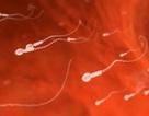 Bước đột phá mới giúp tạo ra tinh trùng từ tế bào da người