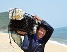 Thợ săn nhum vào mùa kiếm nửa triệu đồng mỗi ngày