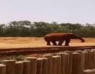 Bé gái tử vong do bị voi ném đá rơi trúng đầu giữa vườn thú