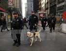 Mỹ có thể phạt đối tượng khủng bố gốc Việt 50 năm tù giam