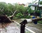 Ảnh tuần qua: Tơi bời sau bão số 1