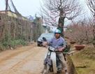 Nở rộ dịch vụ chở hoa, cây cảnh thu tiền triệu mỗi ngày dịp Tết