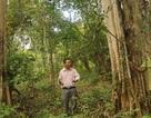 Lại cho phá rừng quốc gia Yok Đôn làm thủy điện