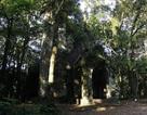 Khám phá kiến trúc cổ trong vườn quốc gia Ba Vì