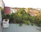 Ảnh dự thi số 3: Xanh mát vườn cây ăn trái giữa thành phố