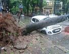 Mưa gió cực mạnh quần thảo tại Hà Nội, cây đổ la liệt