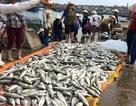 Gần 50 tấn cá chết bất thường tại Nghi Sơn