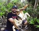 Úc: Cua khổng lồ nặng tới 5kg
