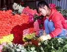 Hoa hồng Đà Lạt cho Valentine tăng giá 5 lần vẫn không đủ hàng